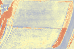 NDVI7 NDVI処理画像(6月20日)