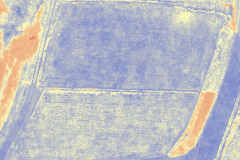 Survey2 NDVI処理画像(6月20日)