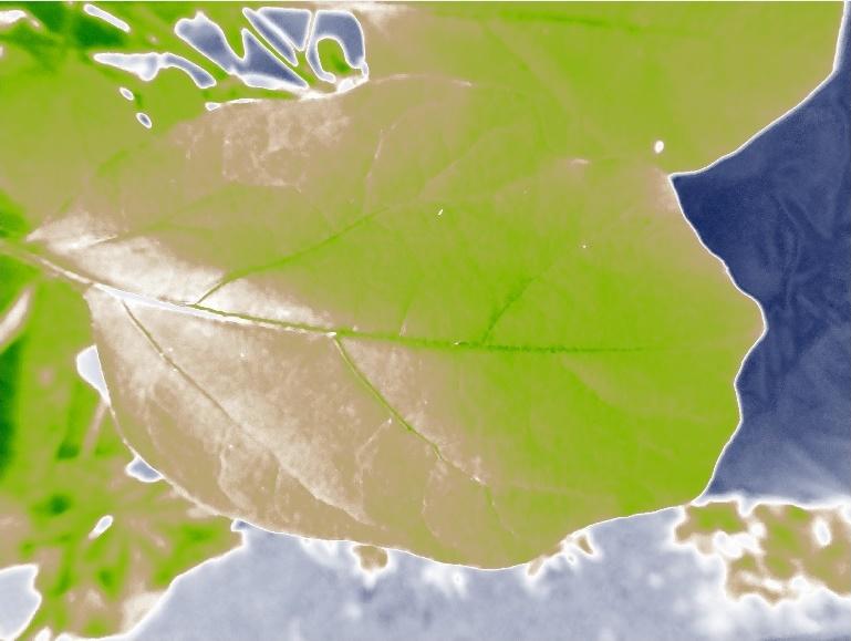 nasu1_zoom1_0522_ndvi-crop